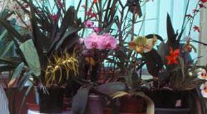 Quand et comment rempoter mon orchid e phase 4 l 39 apr s - Quand rempoter une orchidee ...