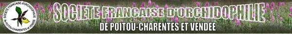 http://www.orchidee-poitou-charentes.org/IMG/jpg/12-ko.jpg