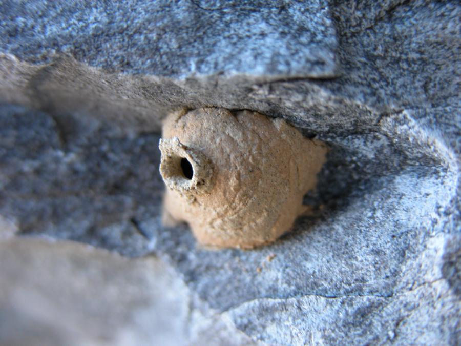 Insectes hymenopteres gu pes ma onnes expertes en - Nid de guepe sous terre ...