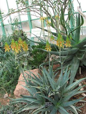 HORS REGION - Le jardin botanique du Parc de la Tête d\'Or à ...
