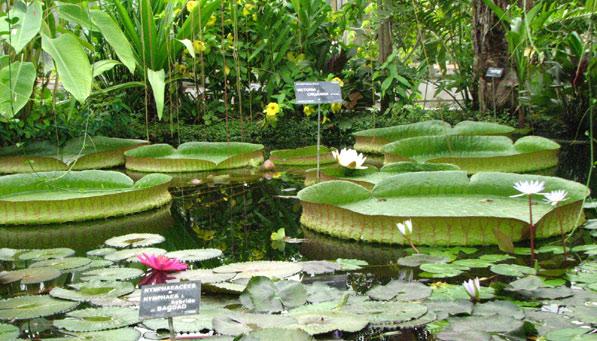 Hors region le jardin botanique du parc de la t te d 39 or for Le jardin 69008 lyon
