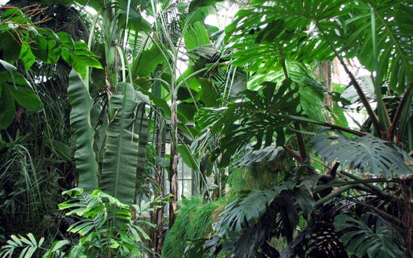 hors region le jardin botanique du parc de la t te d 39 or lyon les grandes serres tropicales. Black Bedroom Furniture Sets. Home Design Ideas